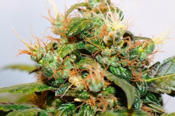 plant-1706657_960_720